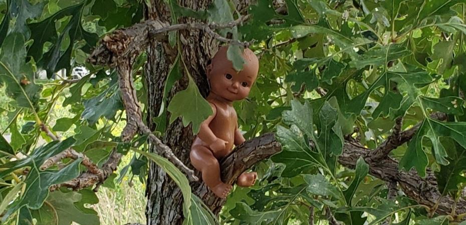 baby doll in an oak tree